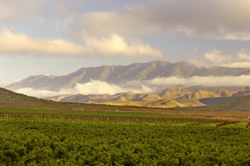 G.Beck Robertson vineyards002